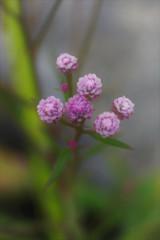 カルスト台地に咲く花