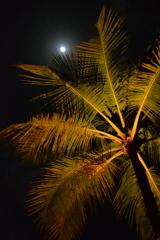 Bali_03 月を仰ぐ