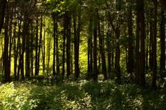 里山の秋 その6 木立のスクリーン