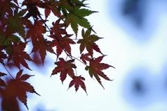 鎌倉の紅葉8