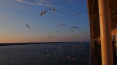夕陽の佐渡汽船