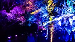 須磨浦公園夜桜のライトアップ①