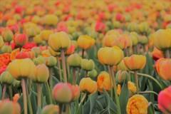 咲き誇る春