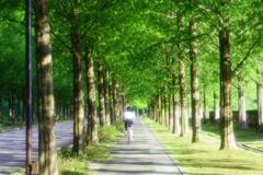 あの日、君と一緒に歩いた並木道で。