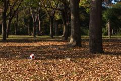 落ち葉とサッカーボール