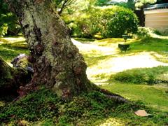DPP_0249高台寺 庭園