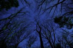 森のざわめきと満天の星