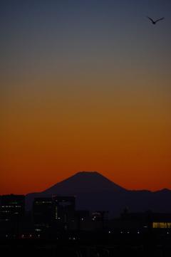 海鳥と夕焼け富士山
