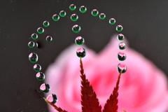 紅葉と奇跡の水玉