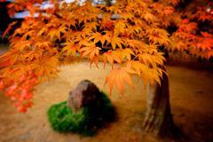 紅葉枯山水