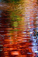 秋色の波紋