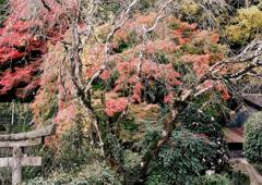 笠置山10