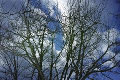 木々たちの舞