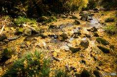 黄金色の川