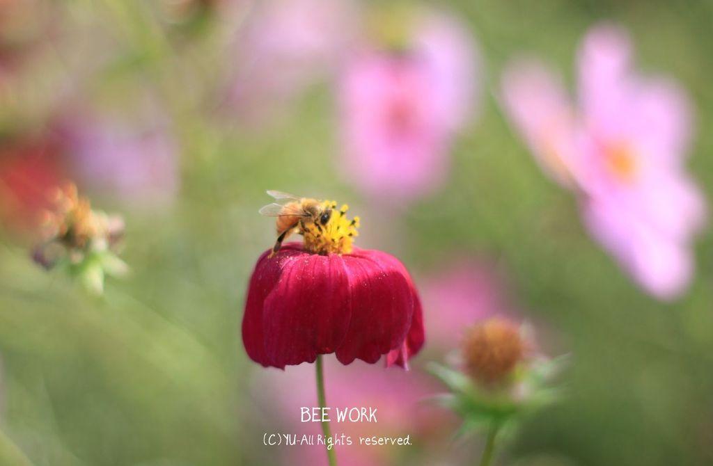 BEE WORK