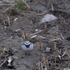 荒野の旅鳥
