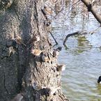 RICOH CX2で撮影した動物(スズメが生る木)の写真(画像)