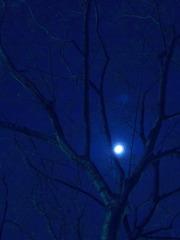 個人的な嗜好【蒼の月】