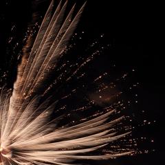 火の鳥の羽根