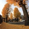 秋色-Orange Road