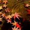 秋の波紋-Waterdrop