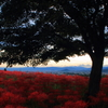 赤く染まる丘