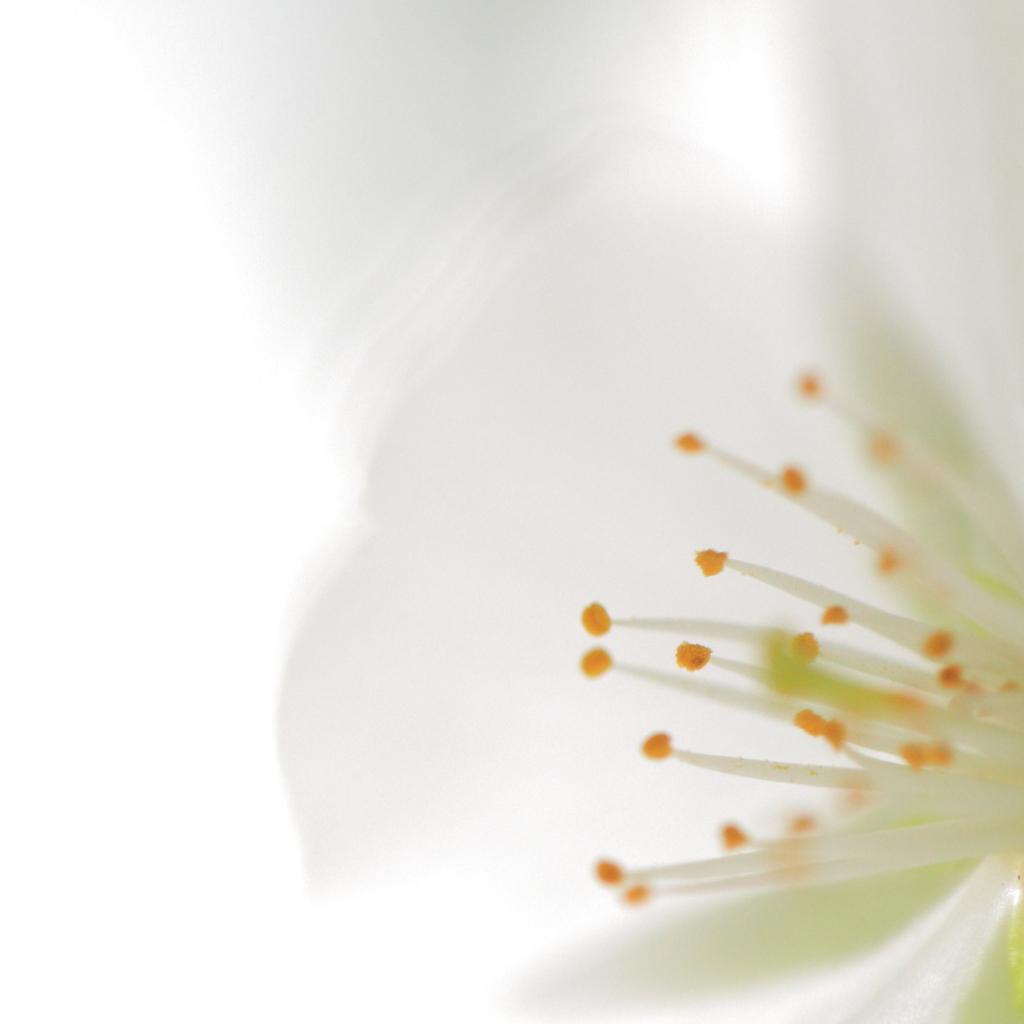 春色-桜のお知らせ