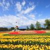 砺波市チューリップ公園