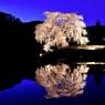 与一野桜(夜の顔)