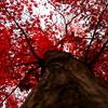 真赤な紅葉