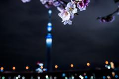 夜桜見物・・・・・には早かった!!