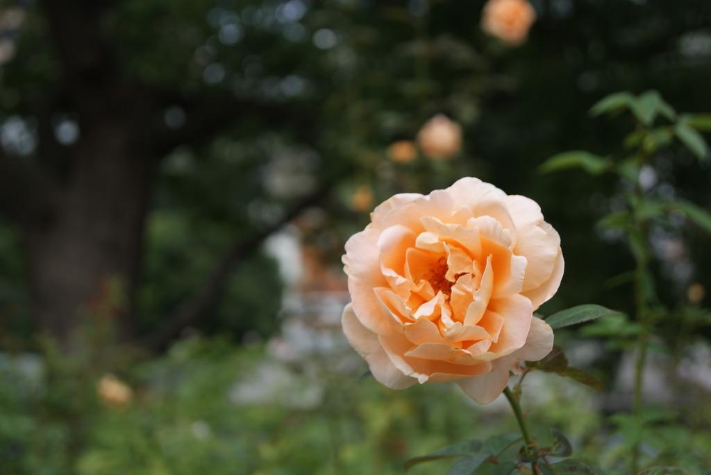 中之島公園 オレンジ