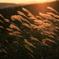 平尾台の夕日