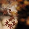 晩秋の光と影