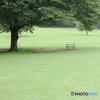 木とベンチ