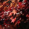 晩秋の光と風