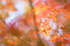 秋のカーニバル