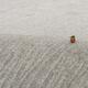 浜のカワちゃん