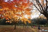 紅葉の木の下で