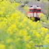 Yellow flower and KIHA