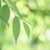 Green of May