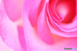 Pink gradation