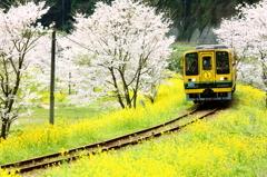 線路のある風景~桜も咲きました~