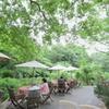 森の中のカフェ