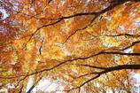 黄葉の木の下で