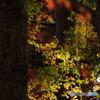 夕刻の森 Ⅲ