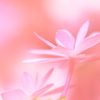 Fantastic pink