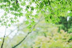 autumn green2