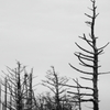 朽ちる木々