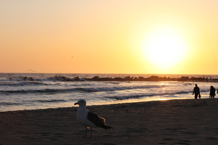 夕暮れ。in venice beach